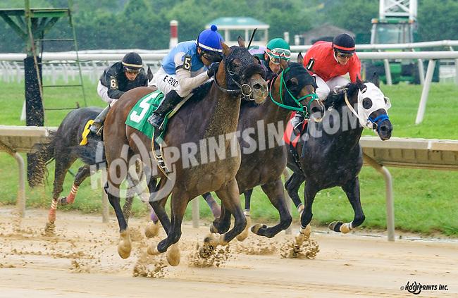 Shy Commander winning at Delaware Park on 7/30/16