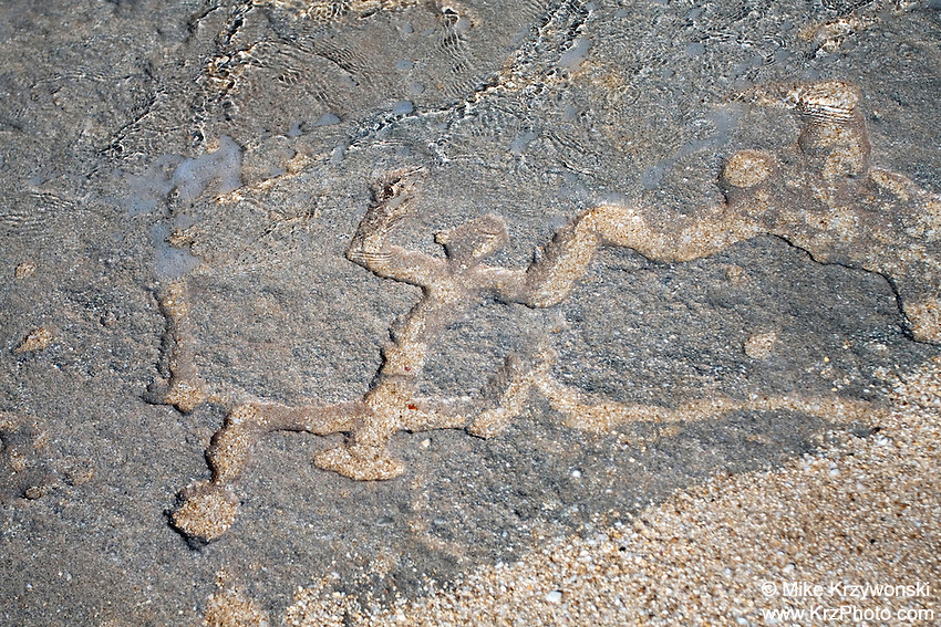 Hawaiian petroglyphs on sandstone along the shore of Keiki Beach, North Shore, Oahu, Hawaii