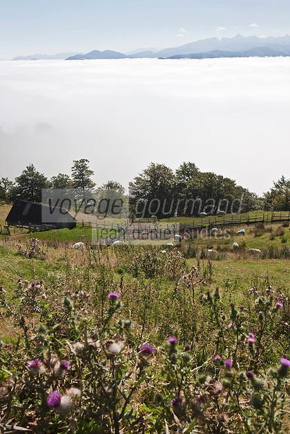 Europe/France/Aquitaine/64/Pyrénées-Atlantiques/Pays-Basque/Iraty: Moutons sur les pentes du Col d'orgambideska
