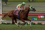 DEL MAR, CA  SEPTEMBER 2: #8 King of Speed, ridden by Gary Stevens, wins the Del Mar Juvenile Turf on September 2, 2018 at Del Mar Thoroughbred Club in Del Mar, CA. (Photo by Casey Phillips/Eclipse Sportswire/Getty ImagesGetty Images