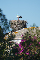 Heron nesting by the 9th tee during Round 1 of the Portugal Masters, Dom Pedro Victoria Golf Course, Vilamoura, Vilamoura, Portugal, 24/10/2019<br /> Picture Andy Crook / Golffile.ie<br /> <br /> All photo usage must carry mandatory copyright credit (© Golffile | Andy Crook)