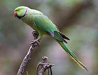 This parakeet was my final photo subject of the trip.