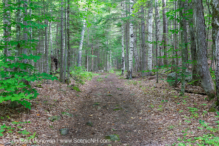 The Cobble Hill Trail in Landaff, New Hampshire during the summer months. This area was part of an 1800s hill farming community.