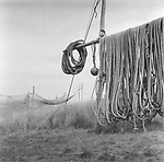 'Jumper' nets used for catching salmon on the coast being dried in preparation to be stored away for the winter at the end of the season at Kinnaber, Angus.<br /> Ref. Catching the Tide 53/00/02 (4th September 2000)<br /> <br /> The once-thriving Scottish salmon netting industry fell into decline in the 1970s and 1980s when the numbers of fish caught reduced due to environmental and economic reasons. In 2016, a three-year ban was imposed by the Scottish Government on the advice of scientists to try to boost dwindling stocks which anglers and conservationists blamed on netsmen.