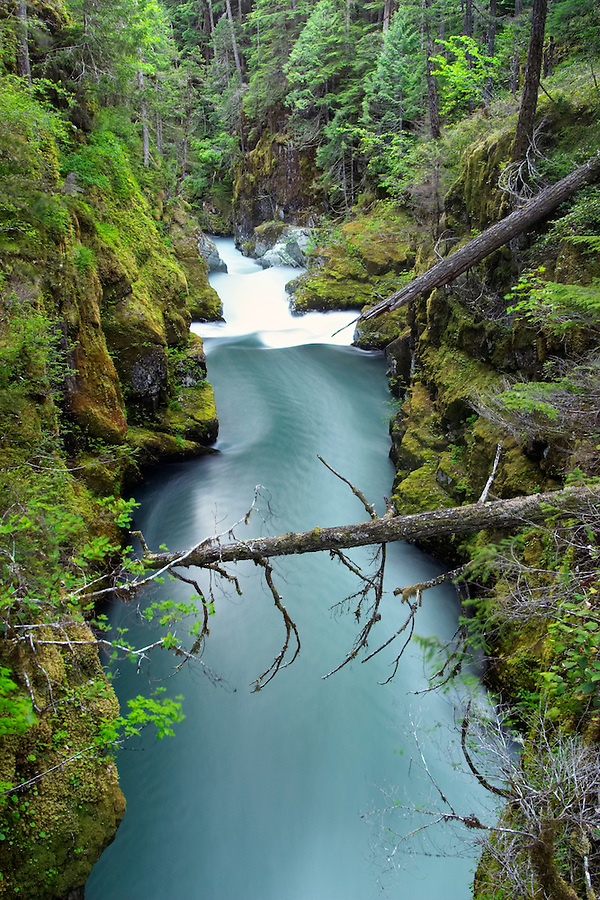 Ohanapecosh River flowing through canyon, Silver Falls, Mount Rainier National Park, Lewis County, Washington, USA