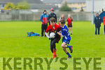 Allianz Cumann na mBunscol  Schools Mini Sevens County finals at Caherslee GAA Ground  on Monday