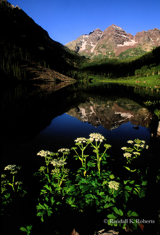 Cow Parsnip flowers and Maroon Bells peaks and Maroon Lake, near Aspen, Colorado