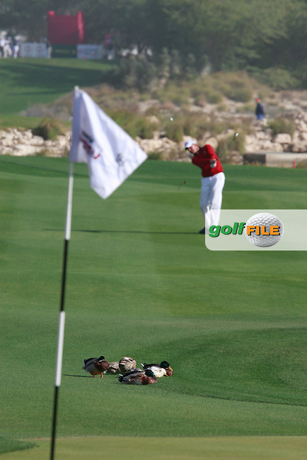 Robert Karlsson (SWE) plays into the 18th green during Saturday's Round 2 of the 2012 Commercialbank Qatar Masters presented by Dolphin Energy at Doha Golf Club, Qatar, 4th February 2012 (Photo Eoin Clarke/www.golffile.ie)