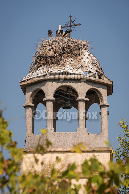 Weathered church steeple with stork's nest, Polski Gradec, Bulgaria