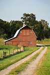 Red barn, metal roof and cupola, two-track lane road in central Nebraska.