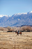 USA, California, Mammoth, a cowboy and his horse ride around one of the pastures on Tatum Ranch in Bishop
