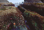 Olympic National Park, Shi Shi Beach, Point of the Arches, Olympic Coast National Marine Sanctuary, Washington State, Pacific Northwest, tide pools Pacific Ocean, Northwest coast, Olympic Peninsula, North America, USA,.
