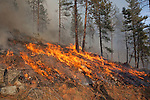 Prescribed fire in ponderosa pine forest in fall on Sinlahekin Wildlife Area in Okanogan County, WA..Treatment unit is Conner 5, which had been logged and thinned in winter prior.  Burning in logging slash.