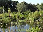 Europa, DEU, Deutschland, Nordrhein Westfalen, Rheinland, Niederrhein, Krefeld, Naturschutzgebiet Riethbenden, Typische Landschaft, Kopfweiden, Das Naturschutzgebiet Riethbenden ist eine Reihung von Teichen und Tuempeln, die, zusammen mit ihren angrenzenden Biotopen, eine alte Fliessrinne des Rheins in der Niederterrasse darstellen. Sie wurde wohl vor der Roemerzeit zum letzten Mal regelmaessig durchstroemt. Der typische Verlandungsprozess der Wasserflaechen, der auch heute noch zu beobachten ist, erfolgt durch den hohen Naehrstoffgehalt des Wassers und das daraus resultierende Pflanzenwachstum, mit seinen sich auf dem Grund ablagernden Resten. Daraus resultieren artenreiche Feuchtgebietsvegetationen unterschiedlichster Auspraegung, die durch angrenzende Wald- und Gruenlandbereiche ergaenzt werden., Kategorien und Themen, Natur, Umwelt, Pflanzen, Pflanzenkunde, Botanik, Biologie, Naturschutz, Naturschutzgebiete, Landschaftsschutz, Biotop, Biotope, Landschaftsschutzgebiete, Landschaftsschutzgebiet, Oekologie, Oekologisch, Typisch, Landschaftstypisch, Landschaftspflege......[Fuer die Nutzung gelten die jeweils gueltigen Allgemeinen Liefer-und Geschaeftsbedingungen. Nutzung nur gegen Verwendungsmeldung und Nachweis. Download der AGB unter http://www.image-box.com oder werden auf Anfrage zugesendet. Freigabe ist vorher erforderlich. Jede Nutzung des Fotos ist honorarpflichtig gemaess derzeit gueltiger MFM Liste - Kontakt, Uwe Schmid-Fotografie, Duisburg, Tel. (+49).2065.677997, ..archiv@image-box.com, www.image-box.com]