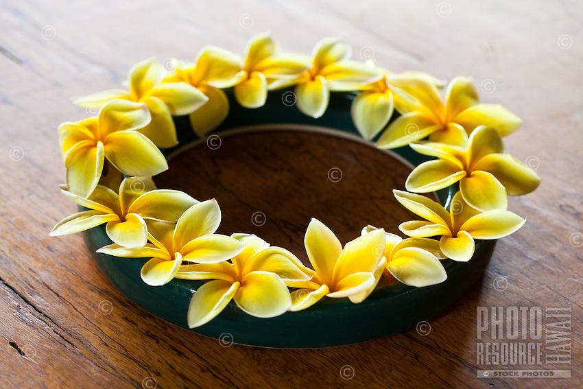 A ring of yellow plumerias