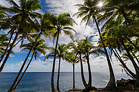 This tree-lined area of the Big Island's Puna coastline offers a restful view of the Pacific Ocean.