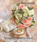 Alfredo, FLOWERS, BLUMEN, FLORES, photos+++++,BRTOLMN29847,#f#, EVERYDAY ,rose,roses