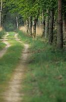 Europe/France/Centre/41/Loir-et-Cher/Sologne/Chambord: Domaine National de Chambord - Allée en forêt