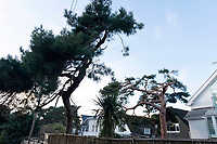 BNPS.co.uk (01202 558833)Pic:  RogerArbon/BNPS<br /> <br /> The rear of the property on Sandbanks, showing the two trees which were cut.<br /> <br /> A millionaire who butchered protected trees that blocked out the sunlight to his two balconies and patio has been ordered to pay almost £60,000.<br /> <br /> Trevor Beale breached a Tree Preservation Order (TPO) by destroying the canopies of the 60ft tall Scots Pines at the back of his luxury home in Sandbanks, Poole, Dorset.<br /> <br /> In doing so he improved the natural light on his property's rear patio and two balconies as well as increased the value of his £1.2m property by 3.5 per cent.<br /> <br /> Beale, 58, should have sought permission from the local authority before carrying out work on the mature trees, one of which was in a neighbouring garden.<br /> <br /> He pleaded guilty to two charges of contravening tree preservation regulations at a previous hearing.