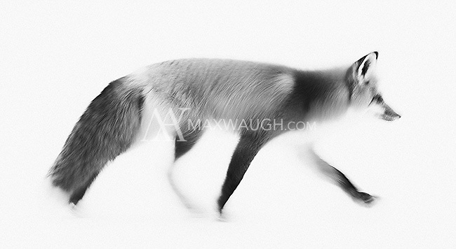 This is a monochrome conversion of a long exposure motion blur.  This photo is also available in color.