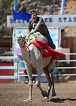 Chris Christensen races in the 54th International Camel Races in Virginia City, Nev., on Friday, Sept. 6, 2013.  <br /> Photo by Cathleen Allison