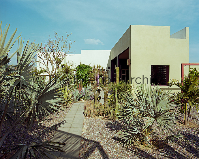 An arid garden of sculptural plants and succulents has been created in the courtyard of the hotel