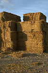 Corn stacked in farm yard, North Yorkshire, England.