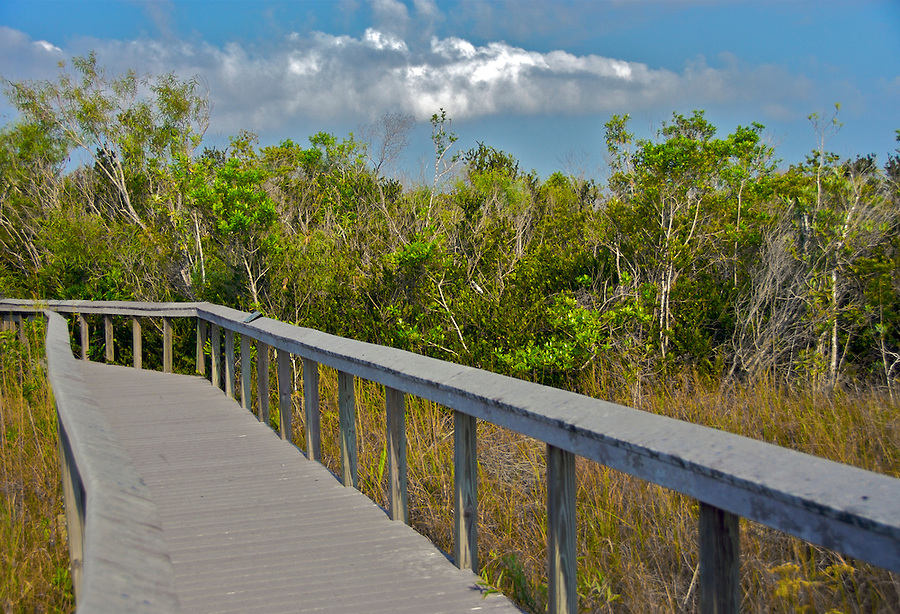 Walking trail in Shark Valley, Eveglades National Park, Florida
