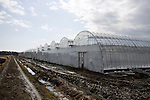 "Photo shows the greenhouses inside which the ""Sendai Recovery"" tomatoes are grown hydroponically in Sendai, Miyagi Prefecture, Japan on 12 Mar., 2012. .Photographer: Robert Gilhooly"