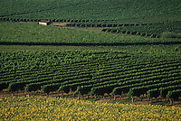 Europe/France/Aquitaine/47/Lot-et-Garonne/Côtes de Duras : Le vignoble