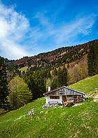 Deutschland, Bayern, Chiemgau, Achental, oberhalb Bergsteigerdorf Schleching: die Blasialm   Germany, Bavaria, Chiemgau, Achen Valley, above mountain village Schleching: Blasialm pasture hut