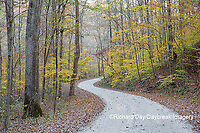 63895-14414 Road in fall at LaRue-Pine Hills in Shawnee National Forest, IL