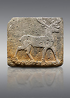 Picture &amp; image of Hittite monumental relief sculpted orthostat stone panel from Water Gate Basalt, Karkamıs, (Kargamıs), Carchemish (Karkemish). 900-700 BC . Stag. Anatolian Civilisations Museum, Ankara, Turkey. With his large and many branched antler, he walks towards the right. <br /> <br /> On a gray background.