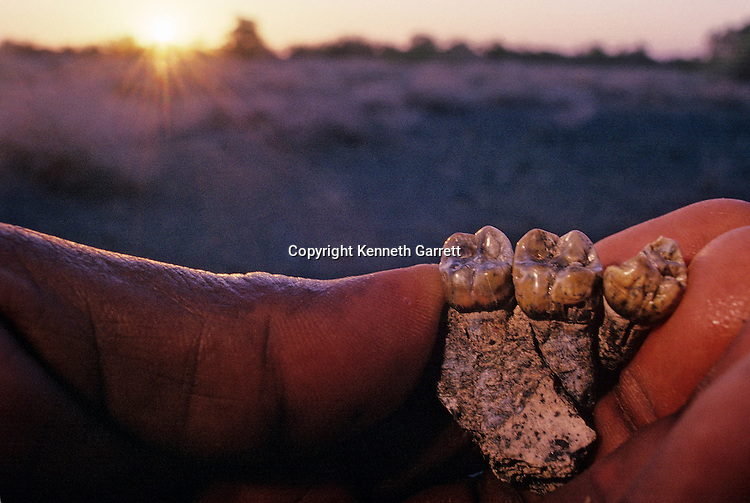 teeth, pre-Australopithecines, East Africa, Lake Turkana region