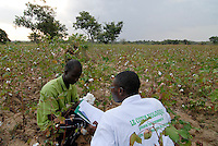 BURKINA FASO, organic cotton project, agricultural advisor at field / Burkina Faso, Helvetas fairtrade und Biobaumwolle Projekt - Mitarbeiter und Berater von Helvetas Burkina Faso bei Biofarmerin Pandé Kandja Sory im Dorf Nayagara bei Bobo Dioulasso