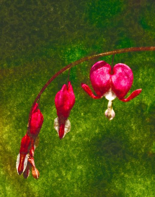 MISSOULA, J.C.FLOWERS