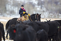 Wyoming cowgirl, Skye Clark, working cows, Smoot Wyoming<br />