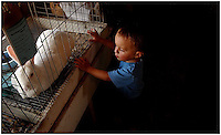A young boy inspects a rabbit at a county fair. Model released photo may be used for illustrative purposes.