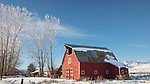 Idaho, west central, Cambridge. A red barn and frosted trees in a snowy landscape.