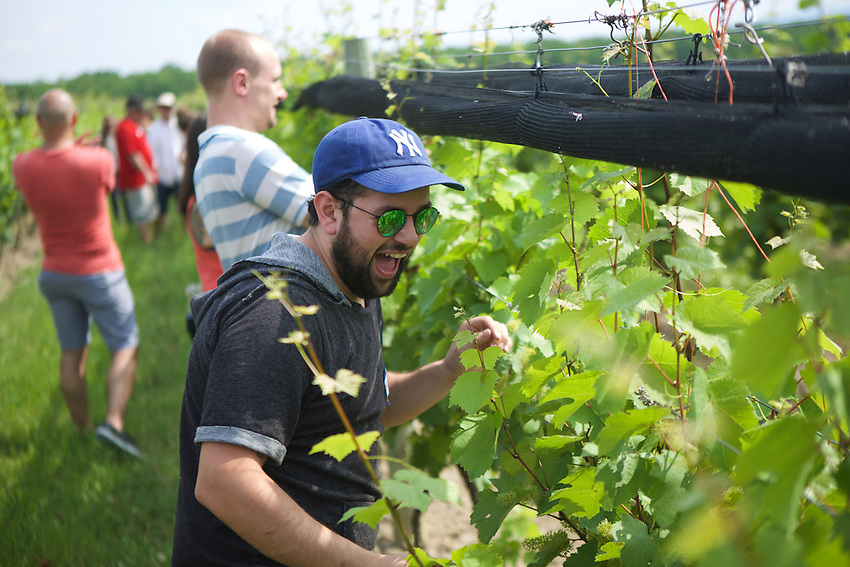 Lodi, NY - June 19, 2016: The New York Wine and Grape Foundation bring New York City sommeliers and wine buyers to the Finger Lakes region as part of its NY Drinks NY program.<br /> <br /> CREDIT: Clay Williams.<br /> <br /> &copy; Clay Williams / claywilliamsphoto.com