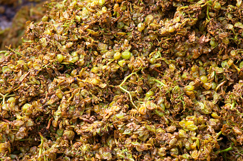 Grape skins and pips after pressing chardonnay clos des langres ardhuy nuits-st-georges cote de nuits burgundy france