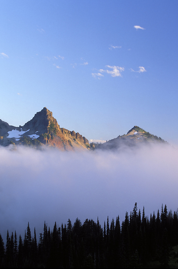 Pinnacle Peak and Plummer above trees silhouetted against fog, Paradise, Mount Rainier National Park, Washington