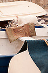 A cat sharpens its claws on a rug that sits on a white and blue boat in Dubrovnik, Croatia.