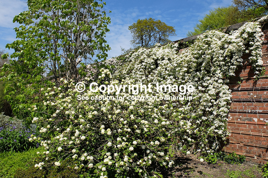 National Trust, Rowallane, Saintfield, N Ireland, UK, walled garden, May, 2015, 201505231075<br />