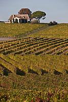 Europe/France/Aquitaine/24/Dordogne/Monbazillac: Le Vignoble AOC Monbazillac