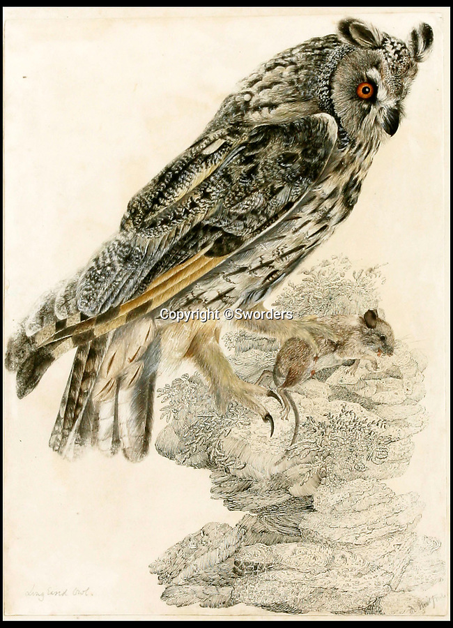 BNPS.co.uk (01202 558833)<br /> Pic: Sworders/BNPS<br /> <br /> Long eared owl by Robert Mitford, est £1500.<br /> <br /> The £1million contents of a majestic 16th century English country house including its eye-catching tapestries, paintings and antique furniture have emerged for sale.<br /> <br /> The jewel in the crown in the everything must go sale at North Mymms Park is a collection of 19 large European tapestries which are each valued at £20,000.<br /> <br /> The 12ft by 17ft tapestries were crafted in weaving workshops across northern Europe from the mid 16th to mid 18th century and have hung in the Grade I listed manor 'of exceptional interest' near Colney, Herts, for over 100 years. <br /> <br /> They were purchased by Anglo-American banker Walter Hayes Burns who acquired the estate in 1893 to accommodate his growing art collection and whose family owned it until 1979.