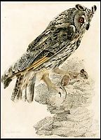 BNPS.co.uk (01202 558833)<br /> Pic: Sworders/BNPS<br /> <br /> Long eared owl by Robert Mitford, est &pound;1500.<br /> <br /> The &pound;1million contents of a majestic 16th century English country house including its eye-catching tapestries, paintings and antique furniture have emerged for sale.<br /> <br /> The jewel in the crown in the everything must go sale at North Mymms Park is a collection of 19 large European tapestries which are each valued at &pound;20,000.<br /> <br /> The 12ft by 17ft tapestries were crafted in weaving workshops across northern Europe from the mid 16th to mid 18th century and have hung in the Grade I listed manor 'of exceptional interest' near Colney, Herts, for over 100 years. <br /> <br /> They were purchased by Anglo-American banker Walter Hayes Burns who acquired the estate in 1893 to accommodate his growing art collection and whose family owned it until 1979.
