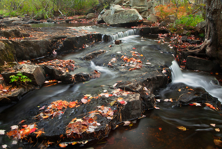 Autumn colors dot Duck Brook on Mount Desert Island in Acadia National Park, Maine, USA