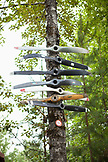 USA, Alaska, Talkeetna, a tree that is covered with old plane propellers