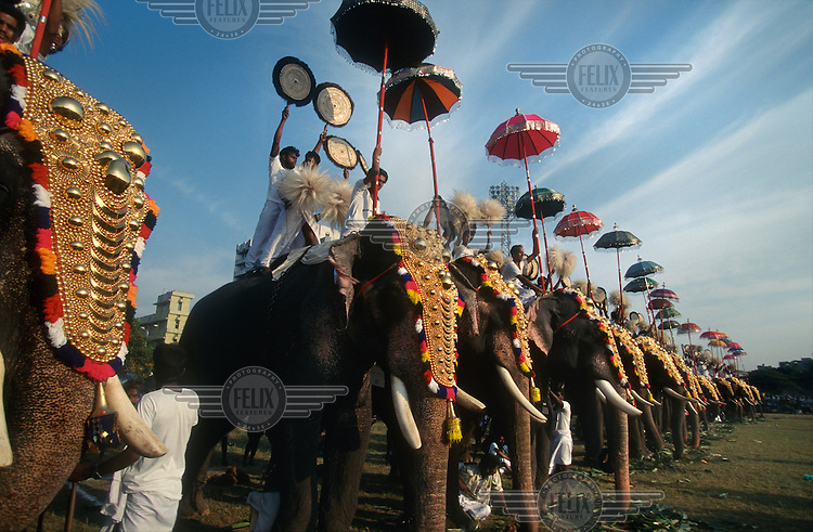 Holy elephants adorned with parasols and gilded headdresses stand in a row at an elephant gathering.